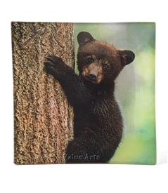 black bear dish