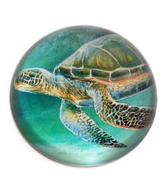 Green Sea Turtle Crystal Dome Paper Weight